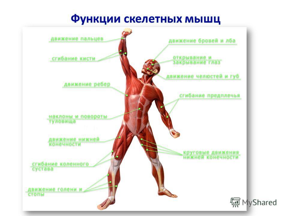 интересные факты биологии человека