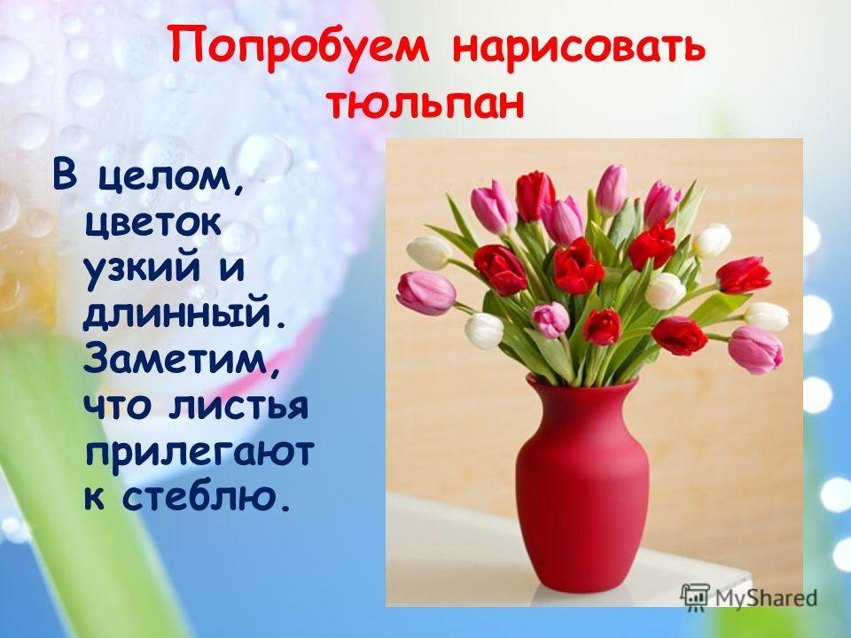 Попробуем нарисовать тюльпан В целом, цветок узкий и длинный. Заметим, что листья прилегают к стеблю.