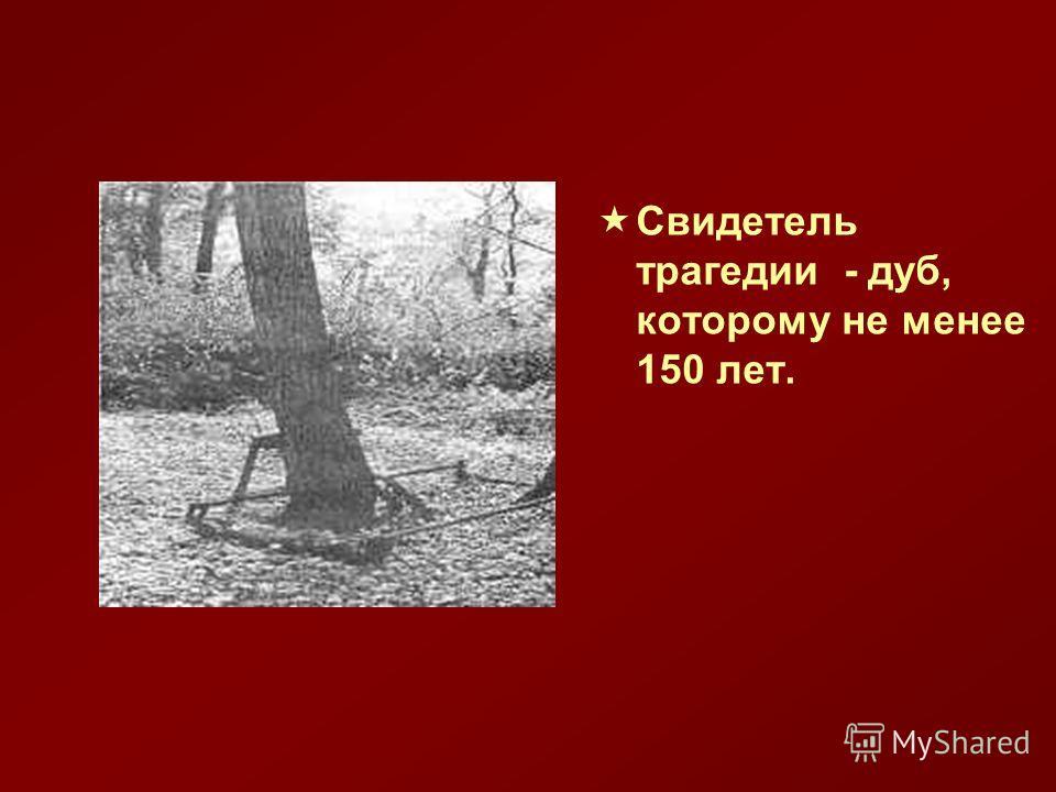 Свидетель трагедии - дуб, которому не менее 150 лет.