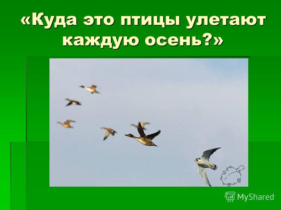 «Куда это птицы улетают каждую осень?»