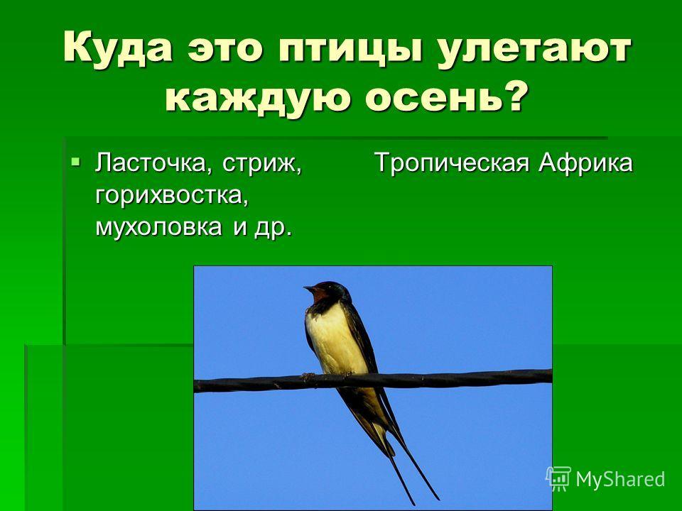 Куда это птицы улетают каждую осень? Ласточка, стриж, горихвостка, мухоловка и др. Ласточка, стриж, горихвостка, мухоловка и др. Тропическая Африка