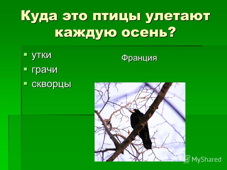 Куда это птицы улетают каждую осень? утки утки грачи грачи скворцы скворцы Франция