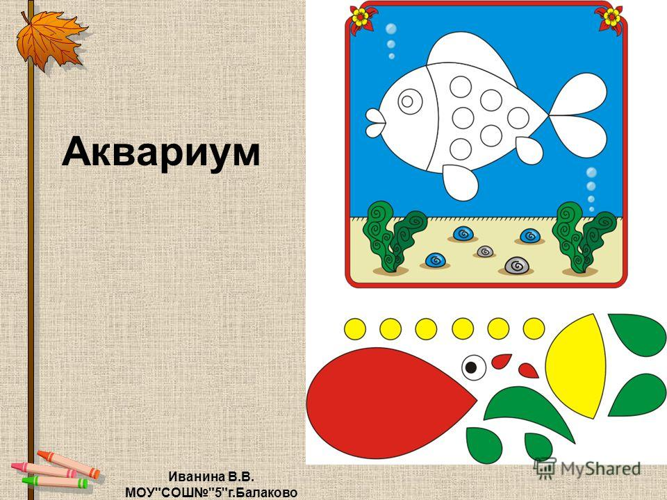 Аквариум Иванина В.В. МОУСОШ5г.Балаково
