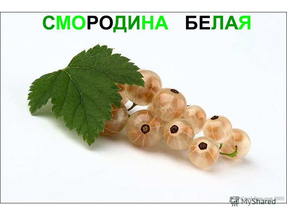 СМОРОДИНА БЕЛАЯ Смородина белая