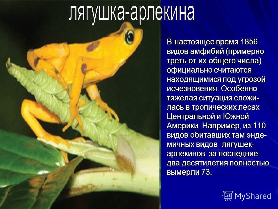 В настоящее время 1856 видов амфибий (примерно треть от их общего числа) официально считаются находящимися под угрозой исчезновения. Особенно тяжелая ситуация сложи- лась в тропических лесах Центральной и Южной Америки. Например, из 110 видов обитавш