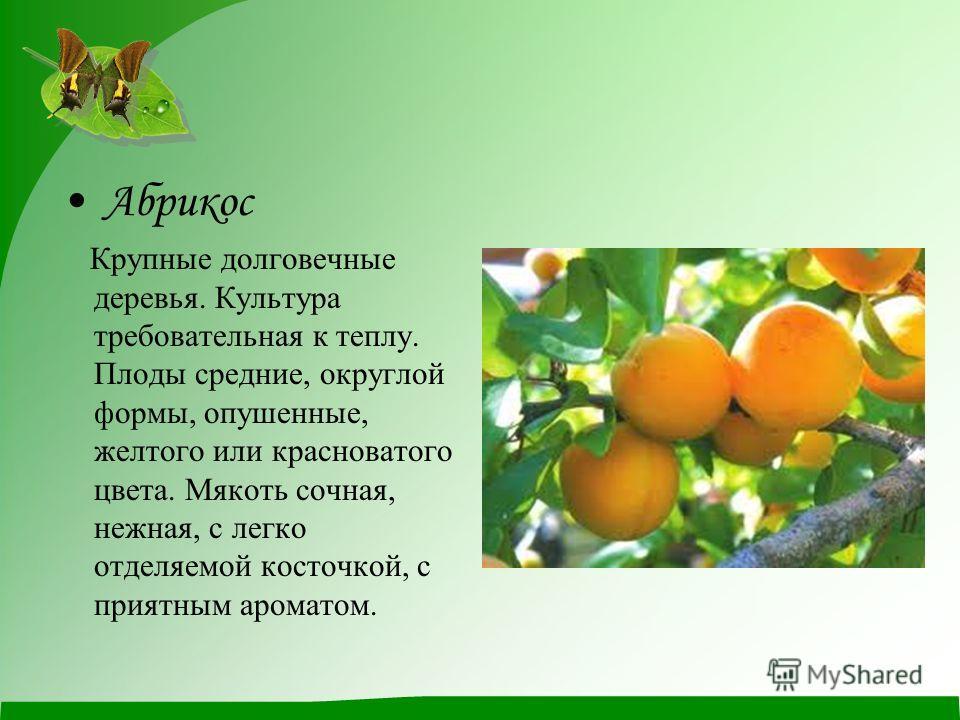 Абрикос Крупные долговечные деревья. Культура требовательная к теплу. Плоды средние, округлой формы, опушенные, желтого или красноватого цвета. Мякоть сочная, нежная, с легко отделяемой косточкой, с приятным ароматом.