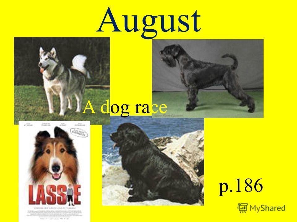 August A dog race p.186