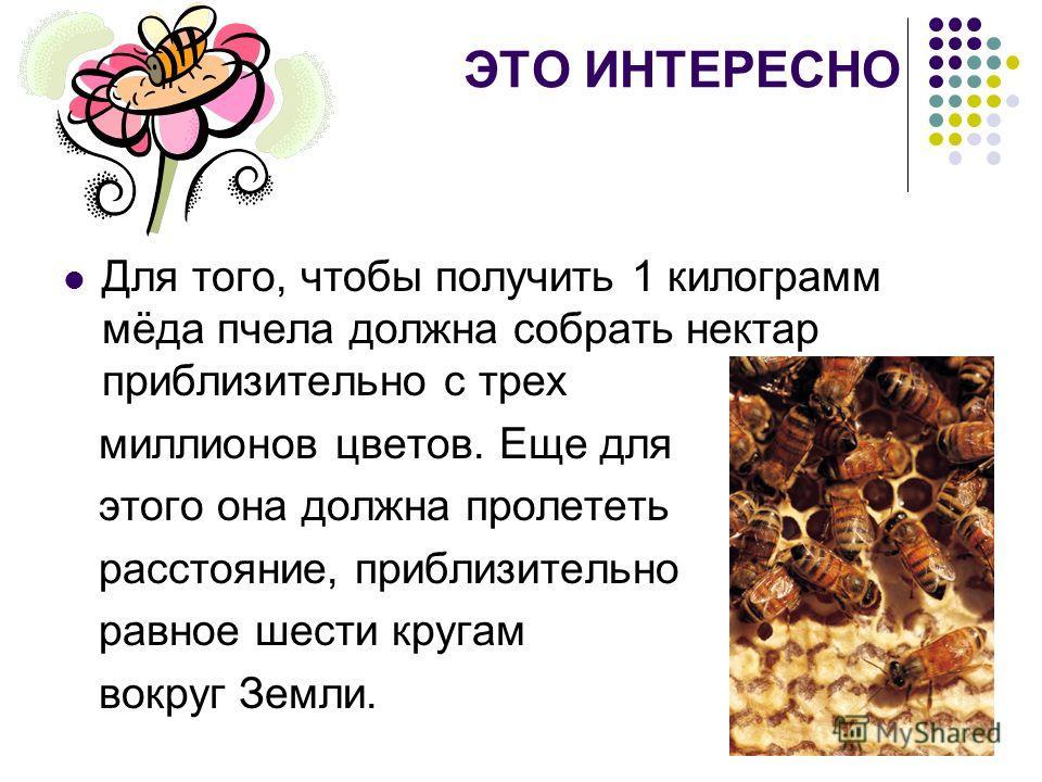 ЭТО ИНТЕРЕСНО Для того, чтобы получить 1 килограмм мёда пчела должна собрать нектар приблизительно с трех миллионов цветов. Еще для этого она должна пролететь расстояние, приблизительно равное шести кругам вокруг Земли.