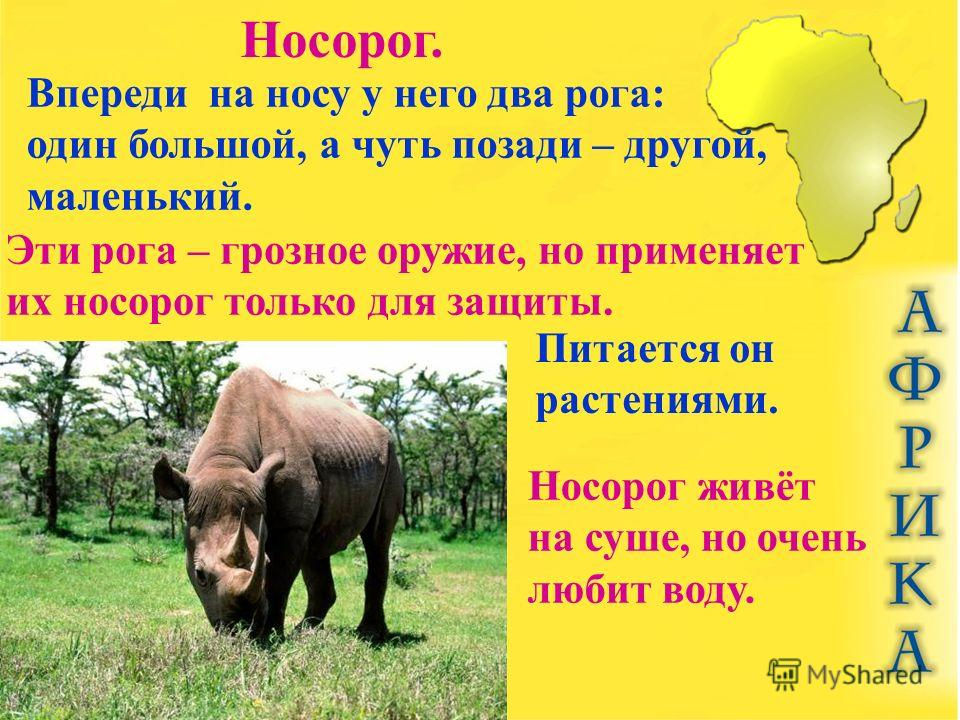 Носорог. Впереди на носу у него два рога: один большой, а чуть позади – другой, маленький. Эти рога – грозное оружие, но применяет их носорог только для защиты. Питается он растениями. Носорог живёт на суше, но очень любит воду.