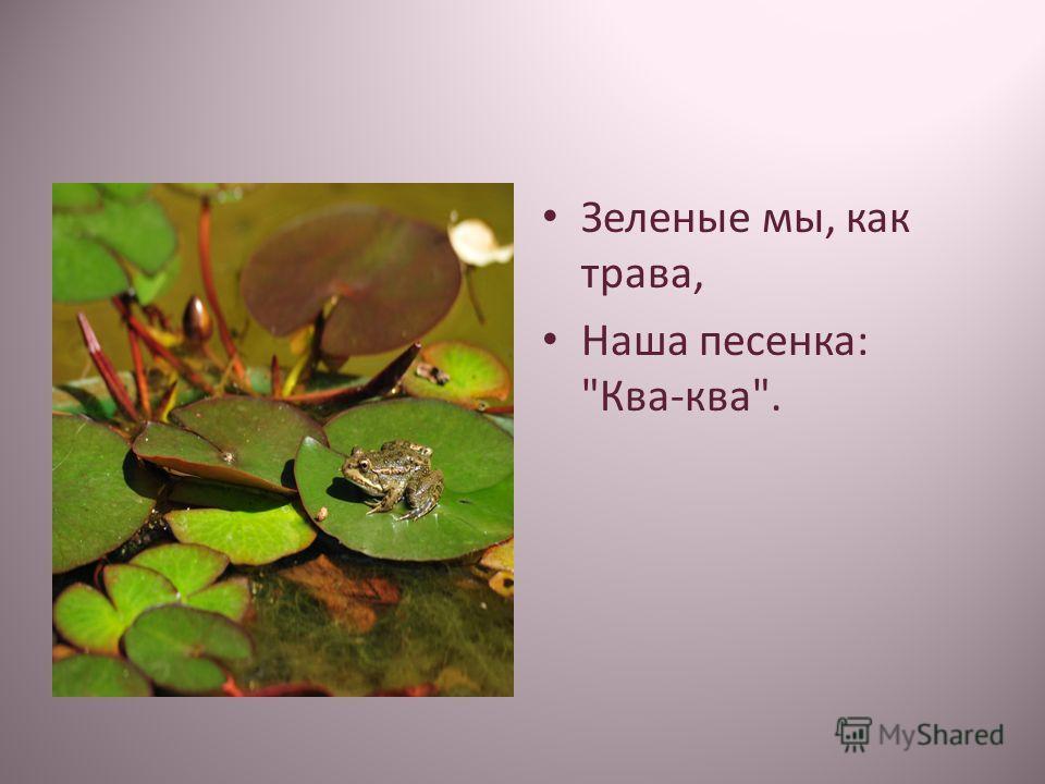Зеленые мы, как трава, Наша песенка: Ква-ква.