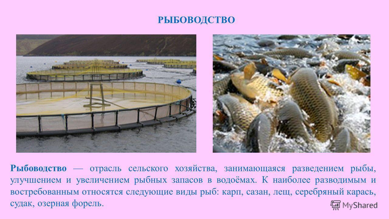 РЫБОВОДСТВО Рыбоводство отрасль сельского хозяйства, занимающаяся разведением рыбы, улучшением и увеличением рыбных запасов в водоёмах. К наиболее разводимым и востребованным относятся следующие виды рыб: карп, сазан, лещ, серебряный карась, судак, о