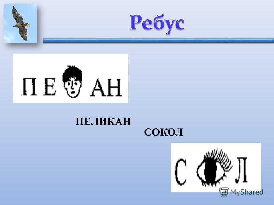 ПЕЛИКАН СОКОЛ