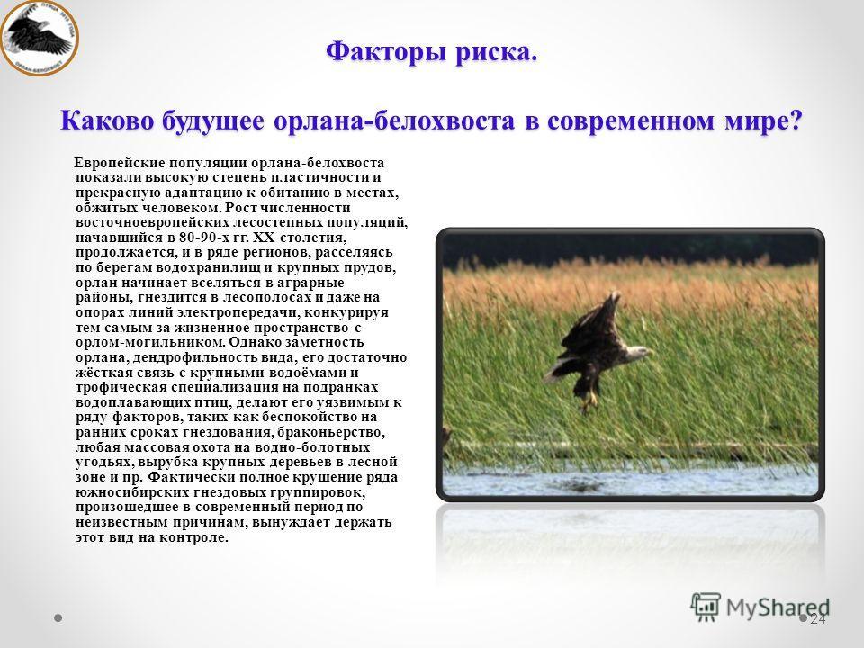 Факторы риска. Каково будущее орлана-белохвоста в современном мире? 24 Европейские популяции орлана-белохвоста показали высокую степень пластичности и прекрасную адаптацию к обитанию в местах, обжитых человеком. Рост численности восточноевропейских л