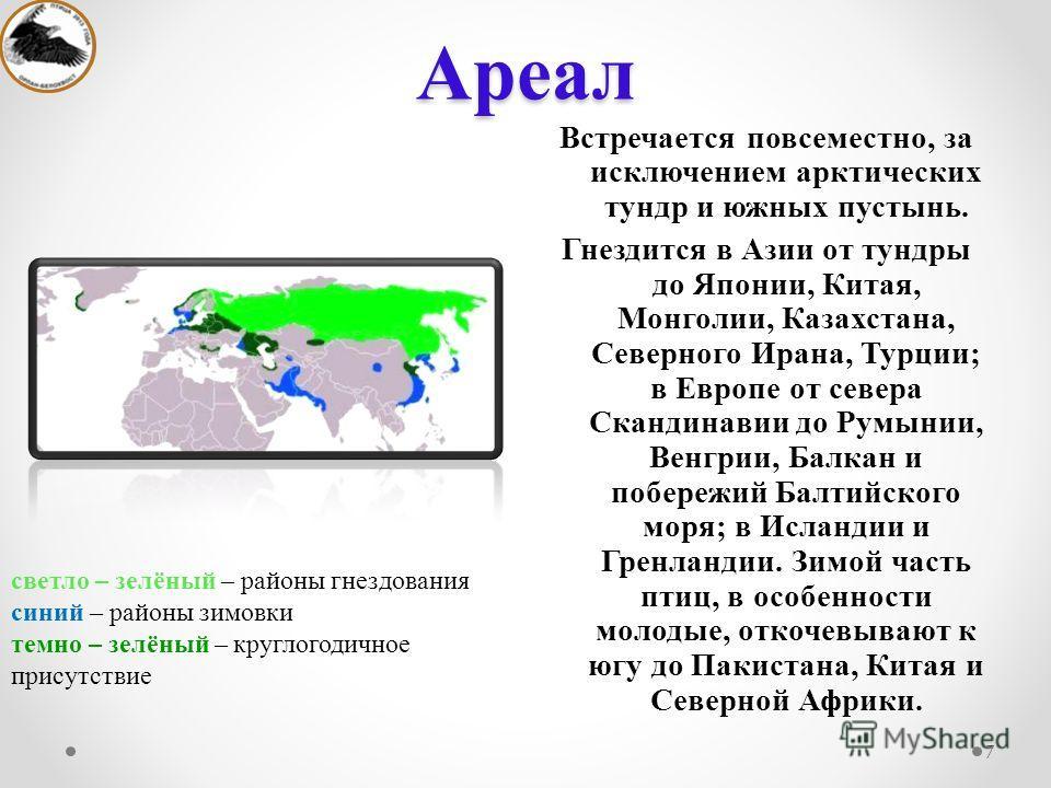 Ареал Встречается повсеместно, за исключением арктических тундр и южных пустынь. Гнездится в Азии от тундры до Японии, Китая, Монголии, Казахстана, Северного Ирана, Турции; в Европе от севера Скандинавии до Румынии, Венгрии, Балкан и побережий Балтий