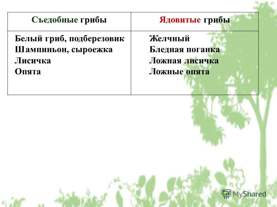 Съедобные грибы Ядовитые грибы Белый гриб, подберезовик Шампиньон, сыроежка Лисичка Опята Желчный Бледная поганка Ложная лисичка Ложные опята