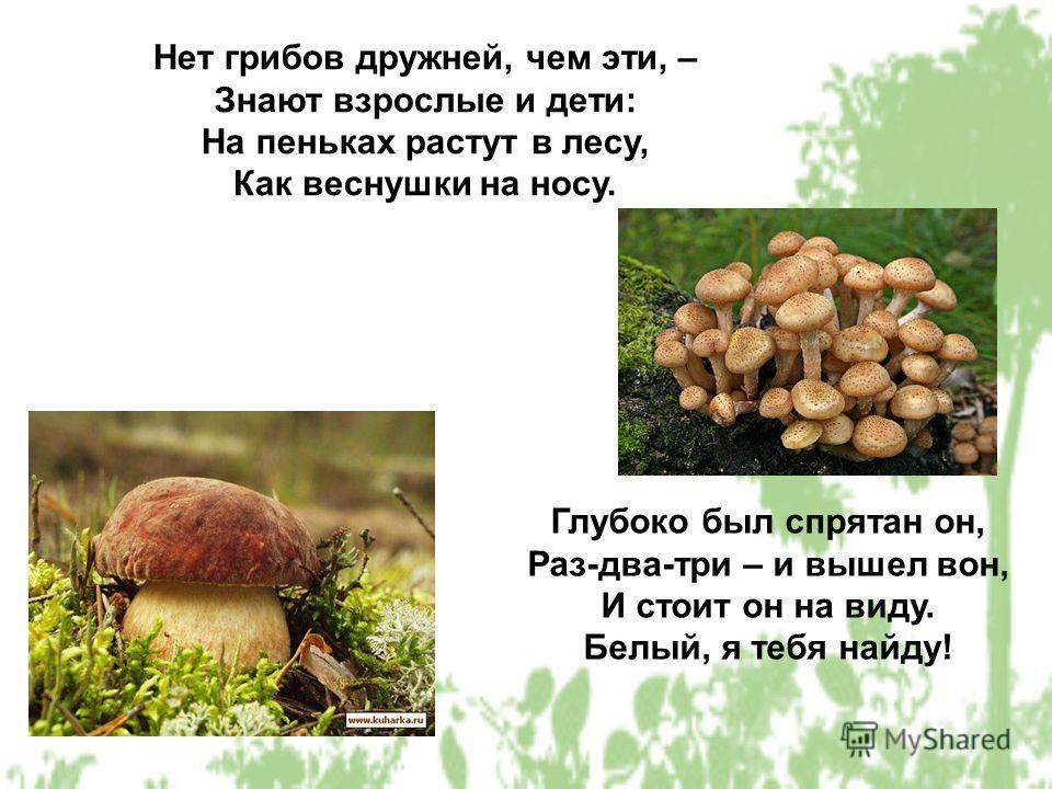 Нет грибов дружней, чем эти, – Знают взрослые и дети: На пеньках растут в лесу, Как веснушки на носу. Глубоко был спрятан он, Раз-два-три – и вышел вон, И стоит он на виду. Белый, я тебя найду!