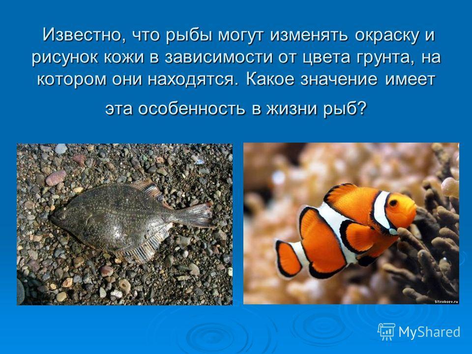 Известно, что рыбы могут изменять окраску и рисунок кожи в зависимости от цвета грунта, на котором они находятся. Какое значение имеет эта особенность в жизни рыб? Известно, что рыбы могут изменять окраску и рисунок кожи в зависимости от цвета грунта