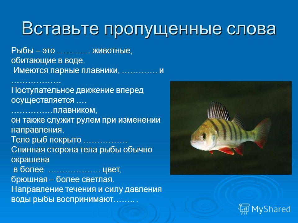 Вставьте пропущенные слова Рыбы – это ………… животные, обитающие в воде. Имеются парные плавники, …………. и ……………… Поступательное движение вперед осуществляется …. ……………плавником, он также служит рулем при изменении направления. Тело рыб покрыто ……………. С