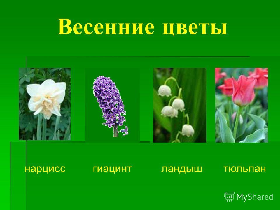 Весенние цветы нарциссгиацинтландыштюльпан