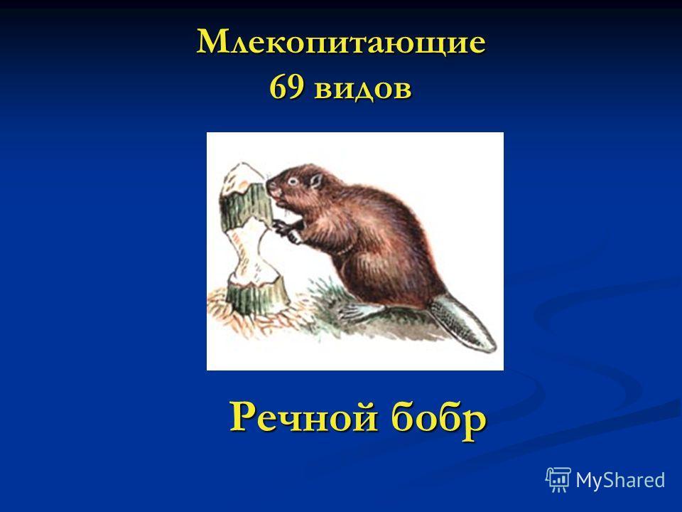 Млекопитающие 69 видов Речной бобр