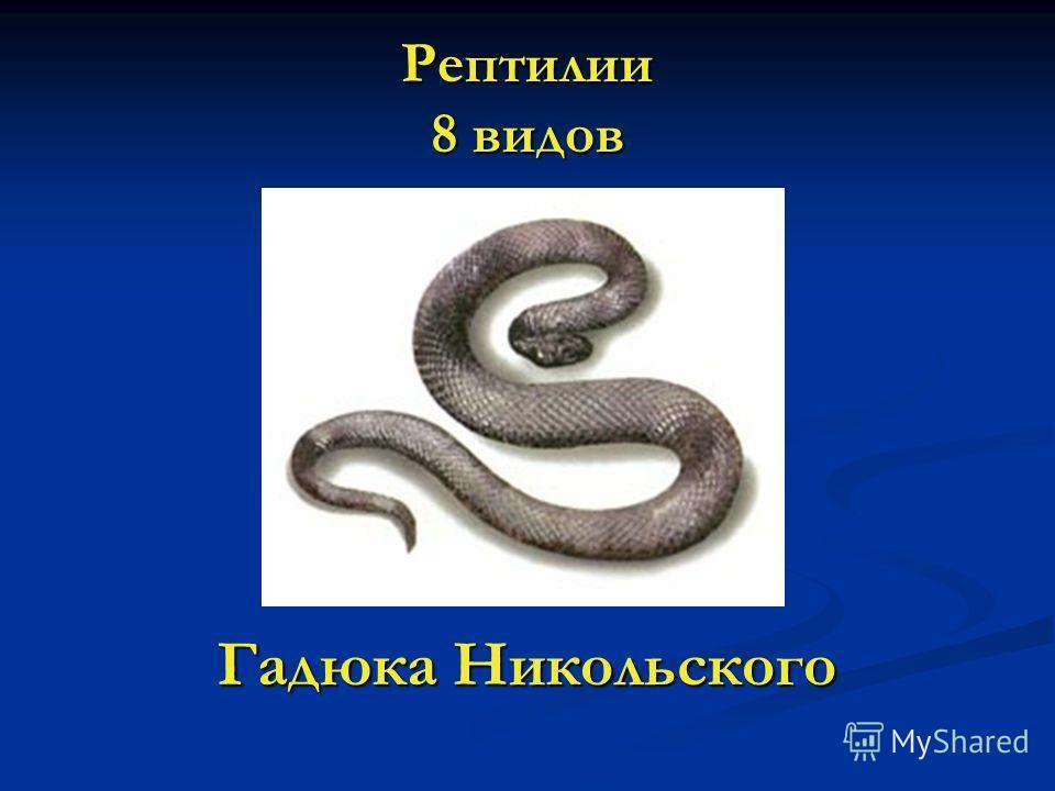 Рептилии 8 видов Гадюка Никольского