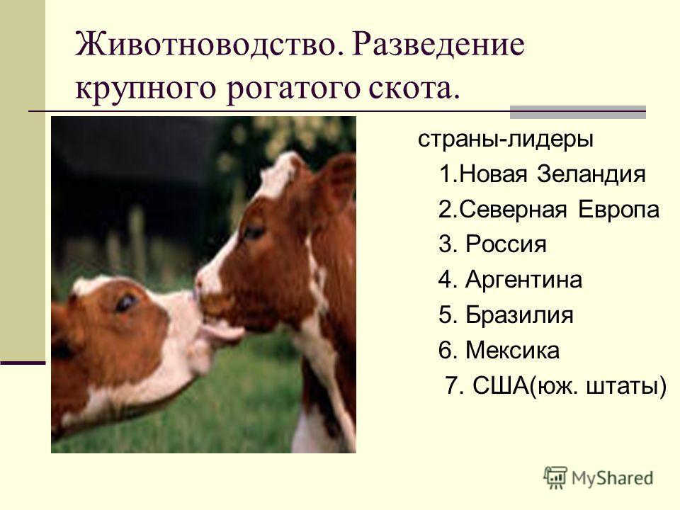 Животноводство. Разведение крупного рогатого скота. страны-лидеры 1. Новая Зеландия 2. Северная Европа 3. Россия 4. Аргентина 5. Бразилия 6. Мексика 7. США(юж. штаты)