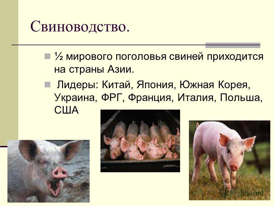 Свиноводство. ½ мирового поголовья свиней приходится на страны Азии. Лидеры: Китай, Япония, Южная Корея, Украина, ФРГ, Франция, Италия, Польша, США