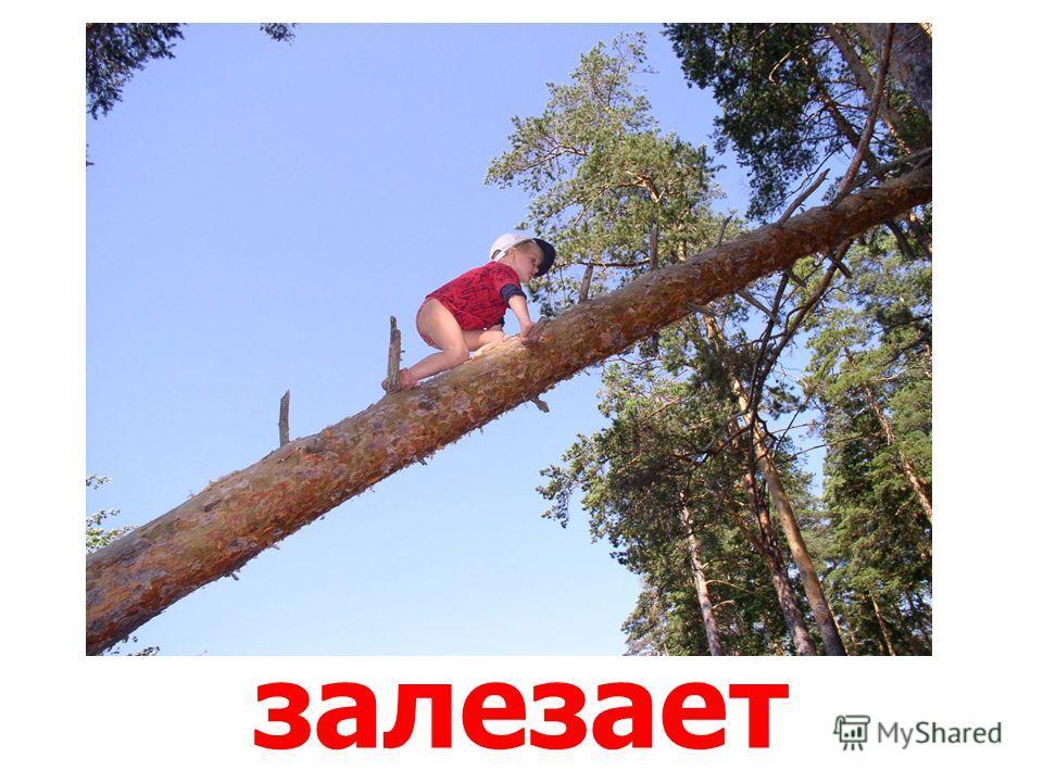 несёт