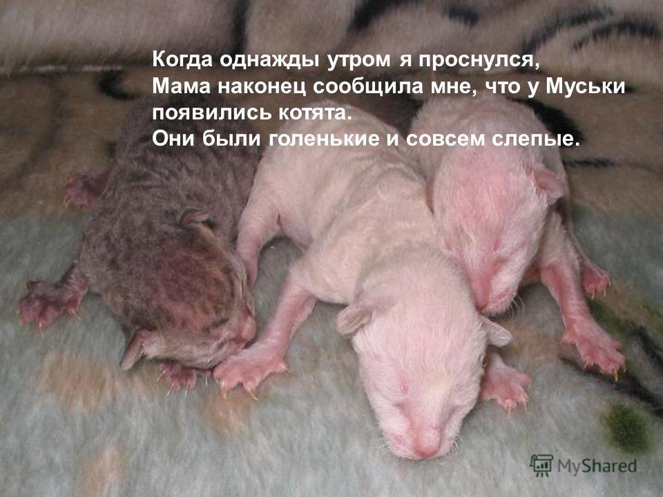 Когда однажды утром я проснулся, Мама наконец сообщила мне, что у Муськи появились котята. Они были голенькие и совсем слепые.