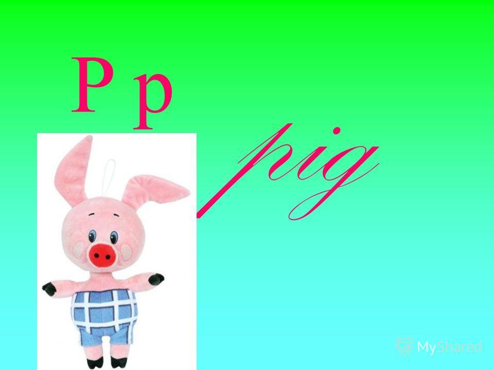 P p pig