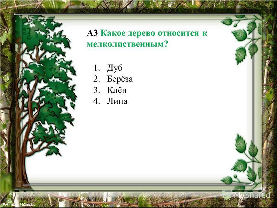 FokinaLida.75@mail.ru А3 Какое дерево относится к мелколиственным? 1. Дуб 2.Берёза 3.Клён 4.Липа