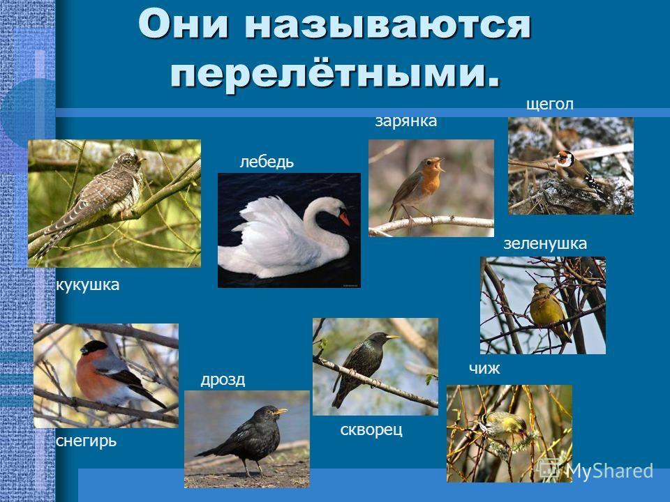 Осень – пора менять дом. Осенью насекомые прячутся, семена трав скрываются под снегом. Многие птицы, не дожидаясь голода, улетают в тёплые края.