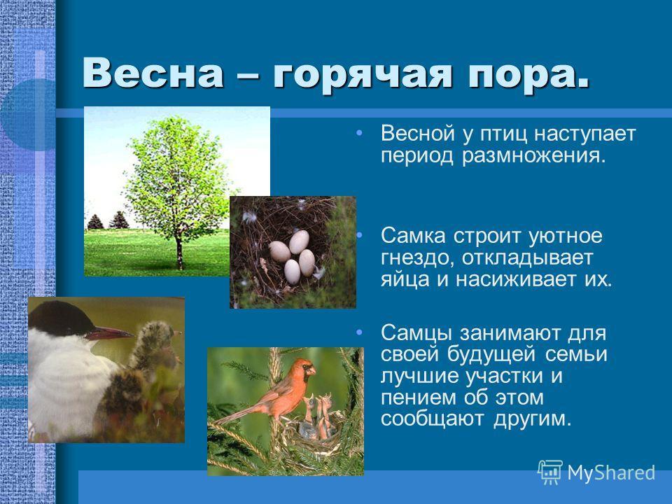 Мы теплокровные. Птицы теплокровные животные, они поддерживают постоянную температуру тела. Более того, она часто выше температуры тела человека. У воробья она составляет почти 42 °C. У скворца кровь еще горячее 44 °C! скворец зарянка