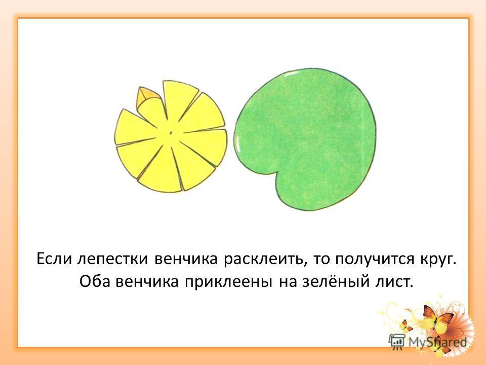 Если лепестки венчика расклеить, то получится круг. Оба венчика приклеены на зелёный лист.