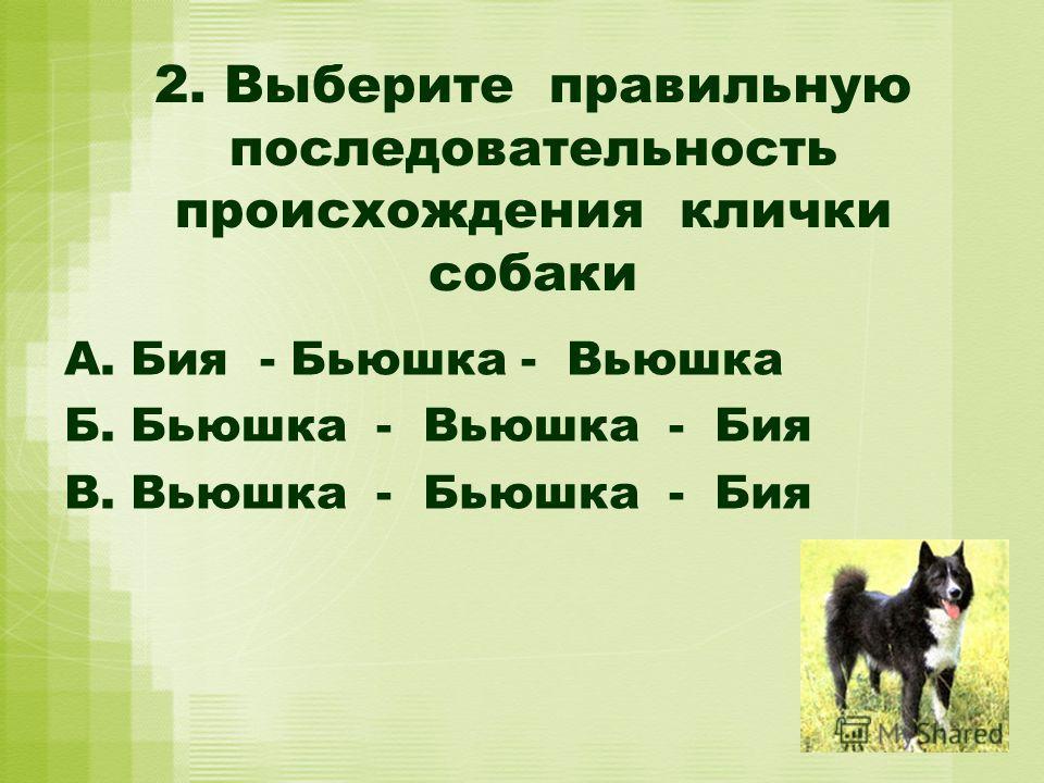 2. Выберите правильную последовательность происхождения клички собаки А. Бия - Бьюшка - Вьюшка Б. Бьюшка - Вьюшка - Бия В. Вьюшка - Бьюшка - Бия
