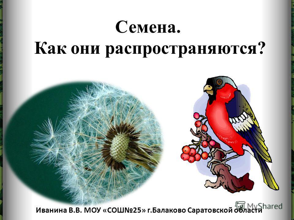 Семена. Как они распространяются? Иванина В.В. МОУ «СОШ25» г.Балаково Саратовской области