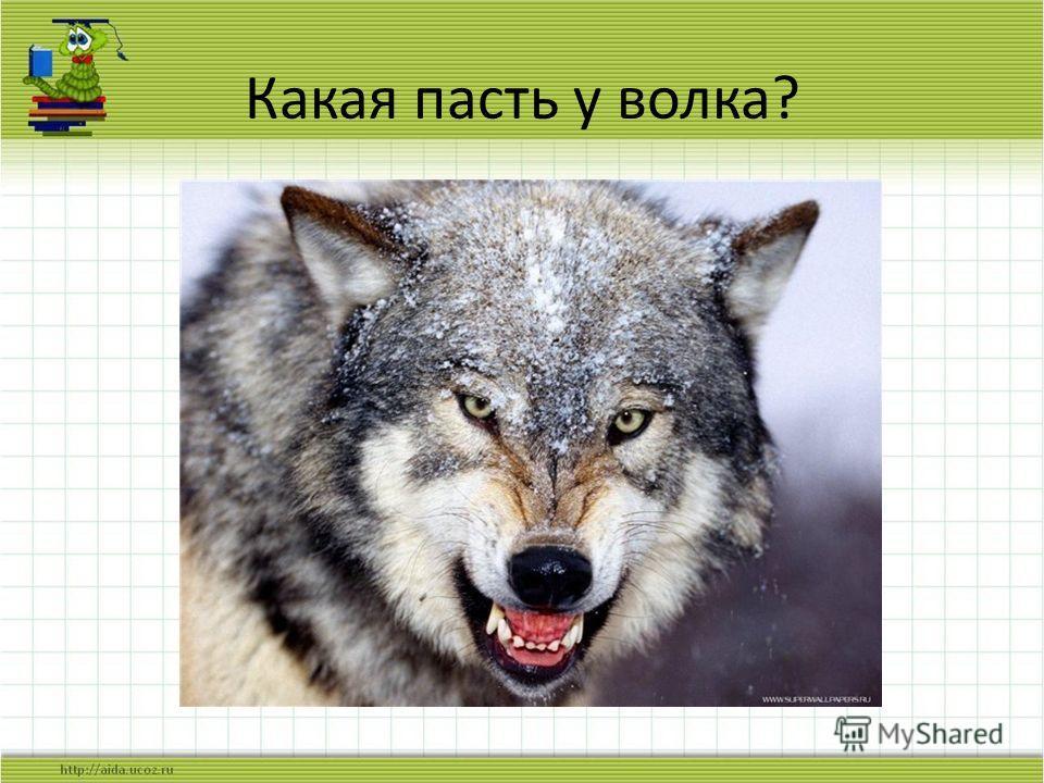 Какая пасть у волка?