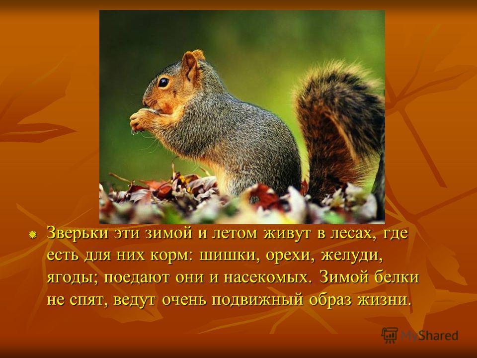 Зверьки эти зимой и летом живут в лесах, где есть для них корм: шишки, орехи, желуди, ягоды; поедают они и насекомых. Зимой белки не спят, ведут очень подвижный образ жизни.