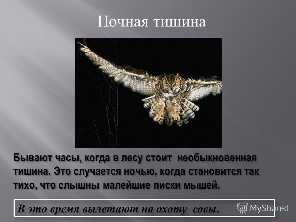 Внешний вид сов. Чем питаются совы ? Какую пользу приносит ? В мире интересного.