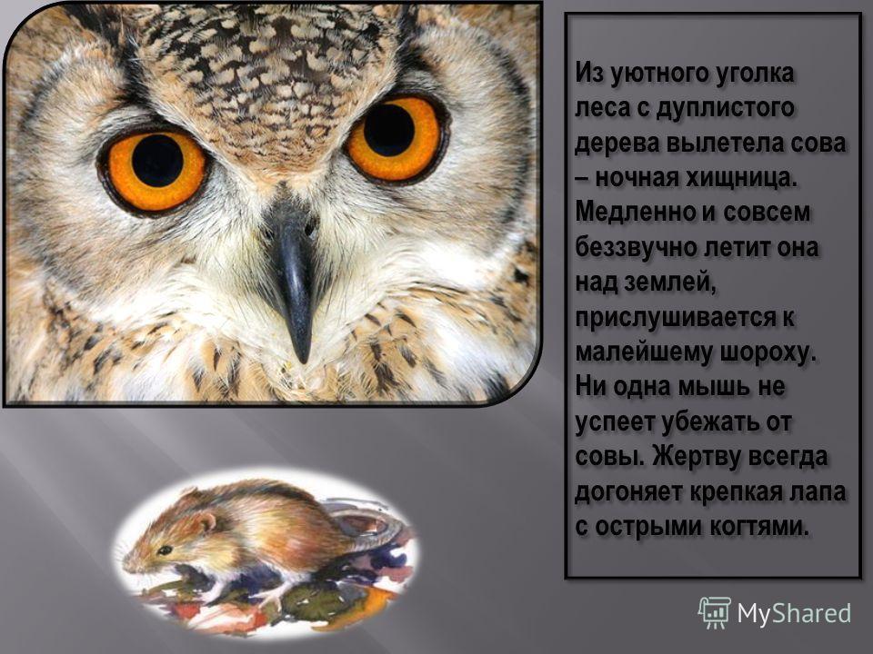 Своим существованием совы обязаны ночной тишине леса. Потому что днём, даже при помощи зрения, охотиться невозможно. http://www.symbolsbook.ru/Article.aspx?id=29 3 http://www.symbolsbook.ru /Article.aspx?id=448
