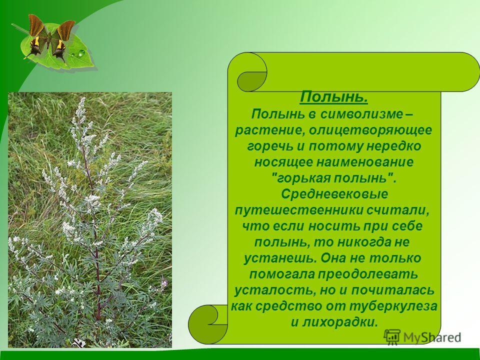 Полынь. Полынь в символизме – растение, олицетворяющее горечь и потому нередко носящее наименование