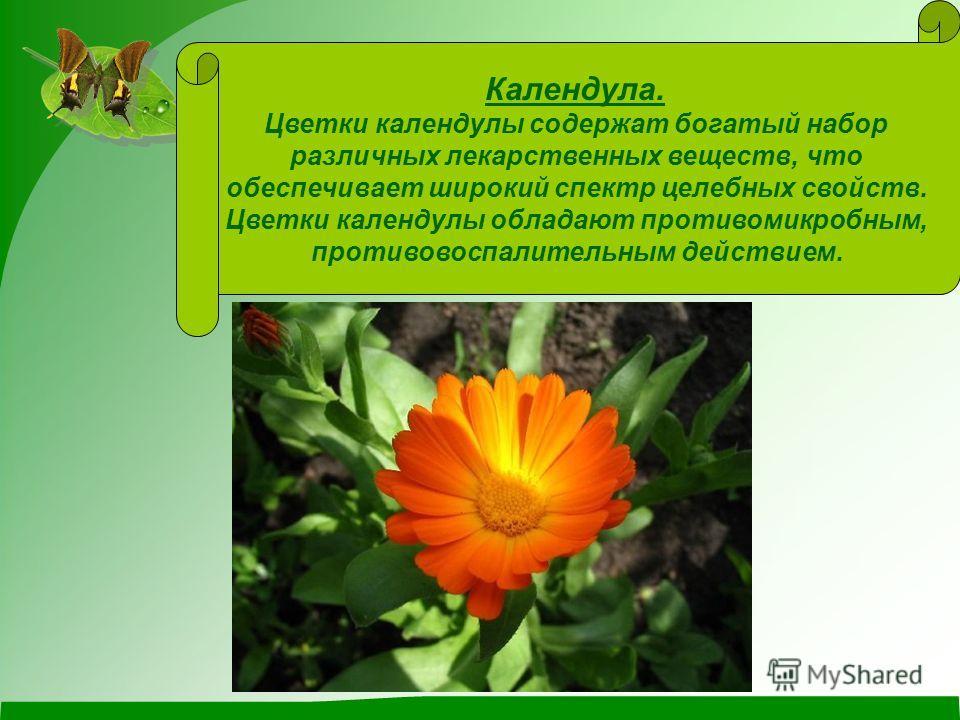 Календула. Цветки календулы содержат богатый набор различных лекарственных веществ, что обеспечивает широкий спектр целебных свойств. Цветки календулы обладают противомикробным, противовоспалительным действием.