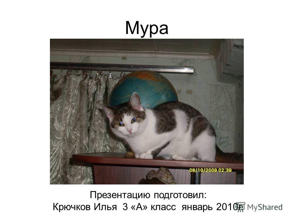Мура Презентацию подготовил: Крючков Илья 3 «А» класс январь 2010 г.