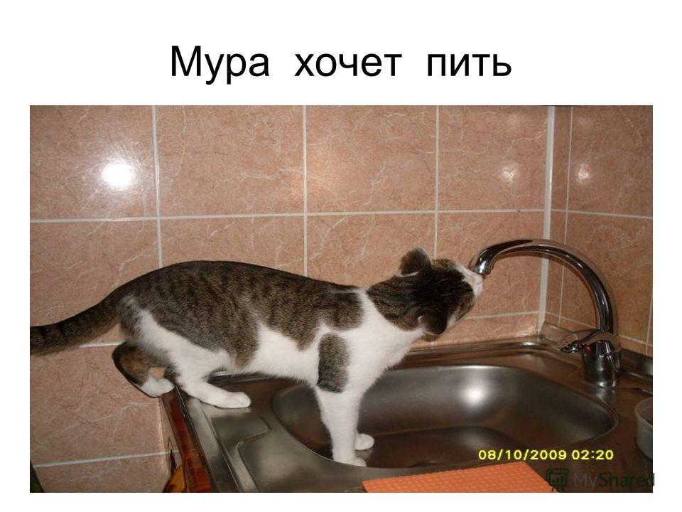 Мура хочет пить