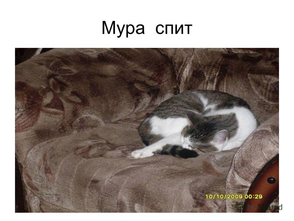 Мура спит