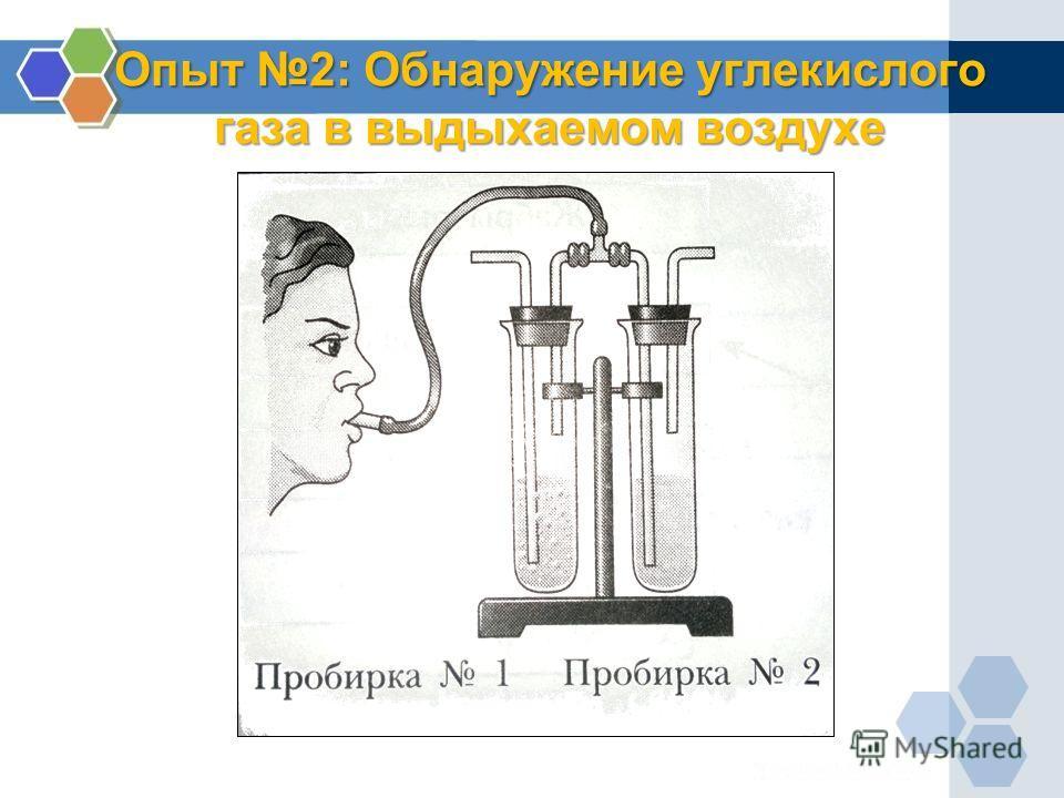 Опыт 2: Обнаружение углекислого газа в выдыхаемом воздухе
