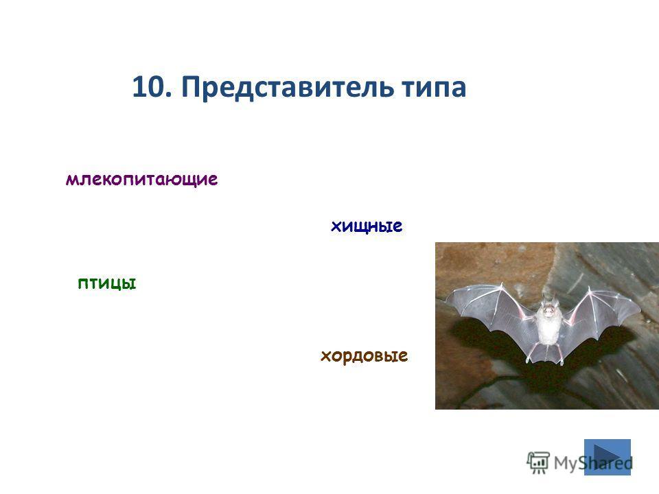 10. Представитель типа млекопитающие хищные птицы хордовые