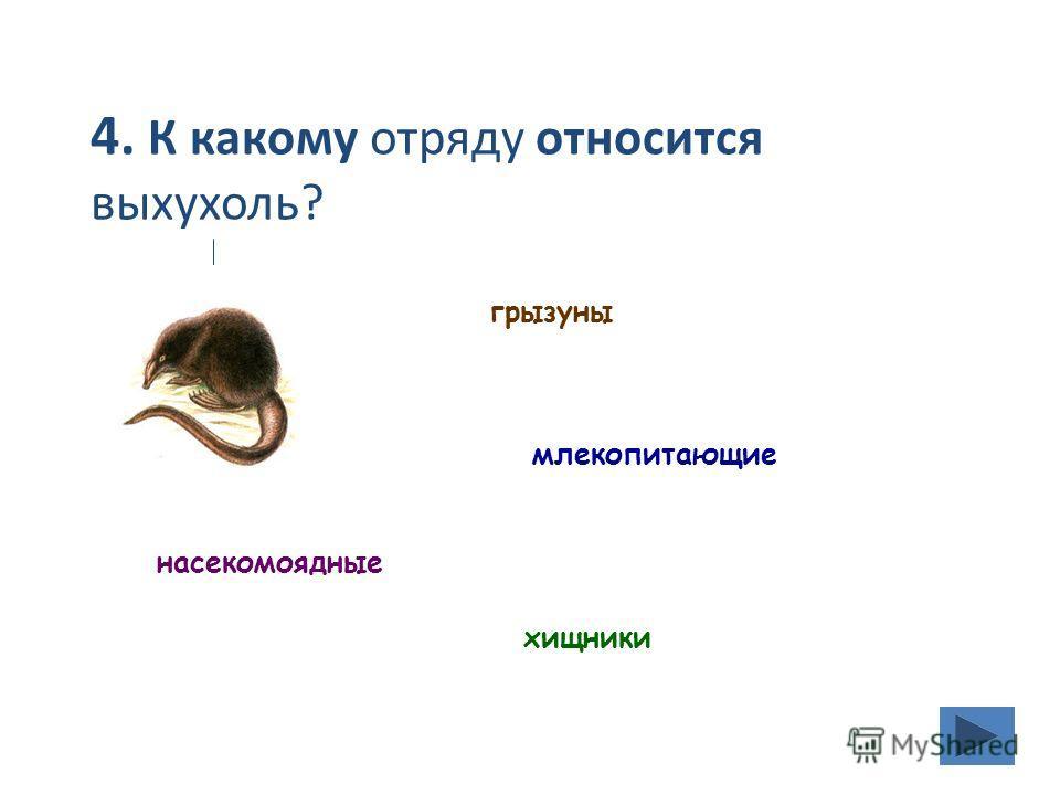 4. К какому отряду относится выхухоль? грызуны хищники насекомоядные млекопитающие