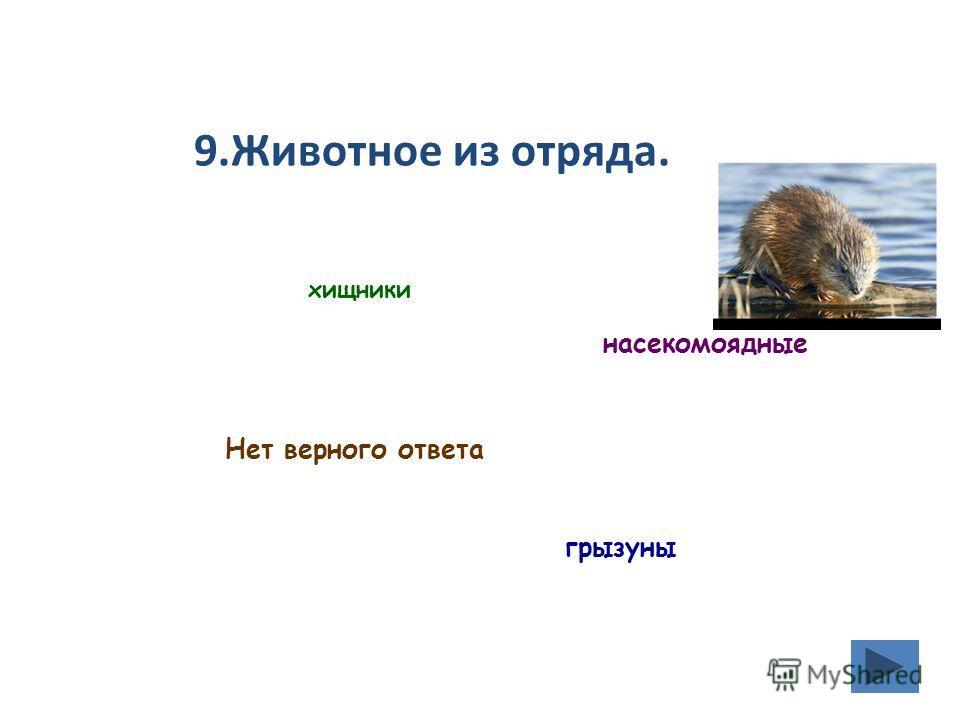 9. Животное из отряда. хищники насекомоядные Нет верного ответа грызуны