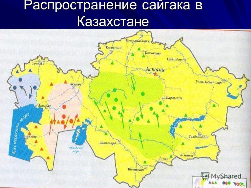 Распространение сайгака в Казахстане